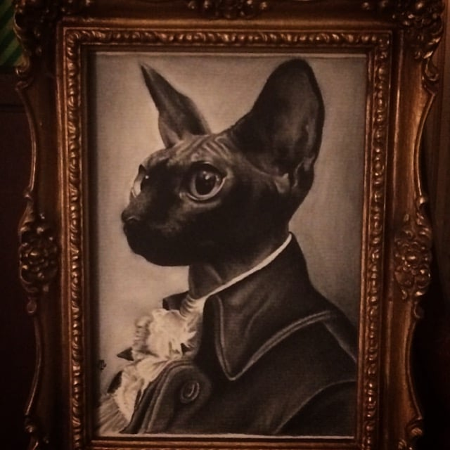 Michael Tehrani - Pet Portraits